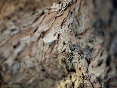 Ameisenperspektive 2