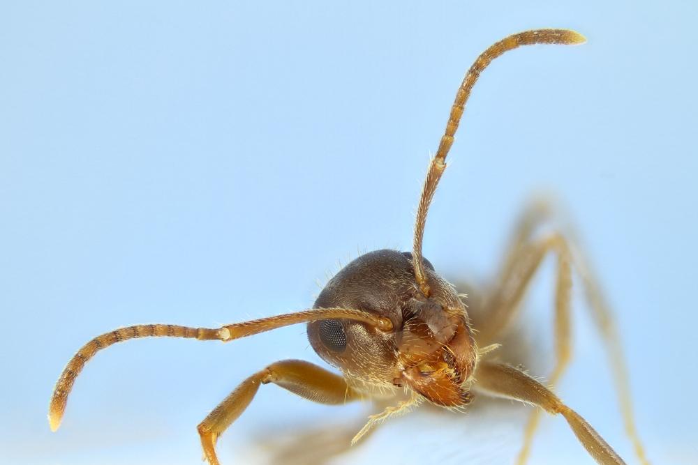 Ameisenportrait