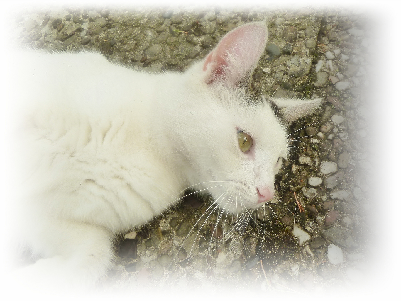 Amelie mein zartes Kätzchen.
