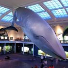 American Museum of Natural History - 2