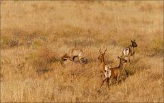 american wildlife scene
