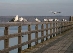 ammersee februar 2008