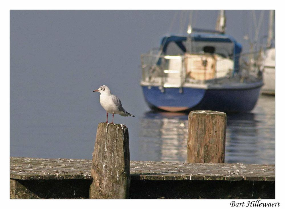 Ammersee V