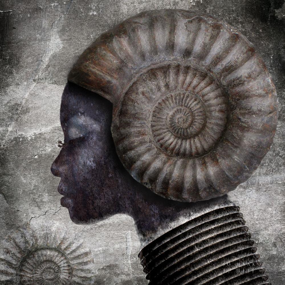 Ammonita