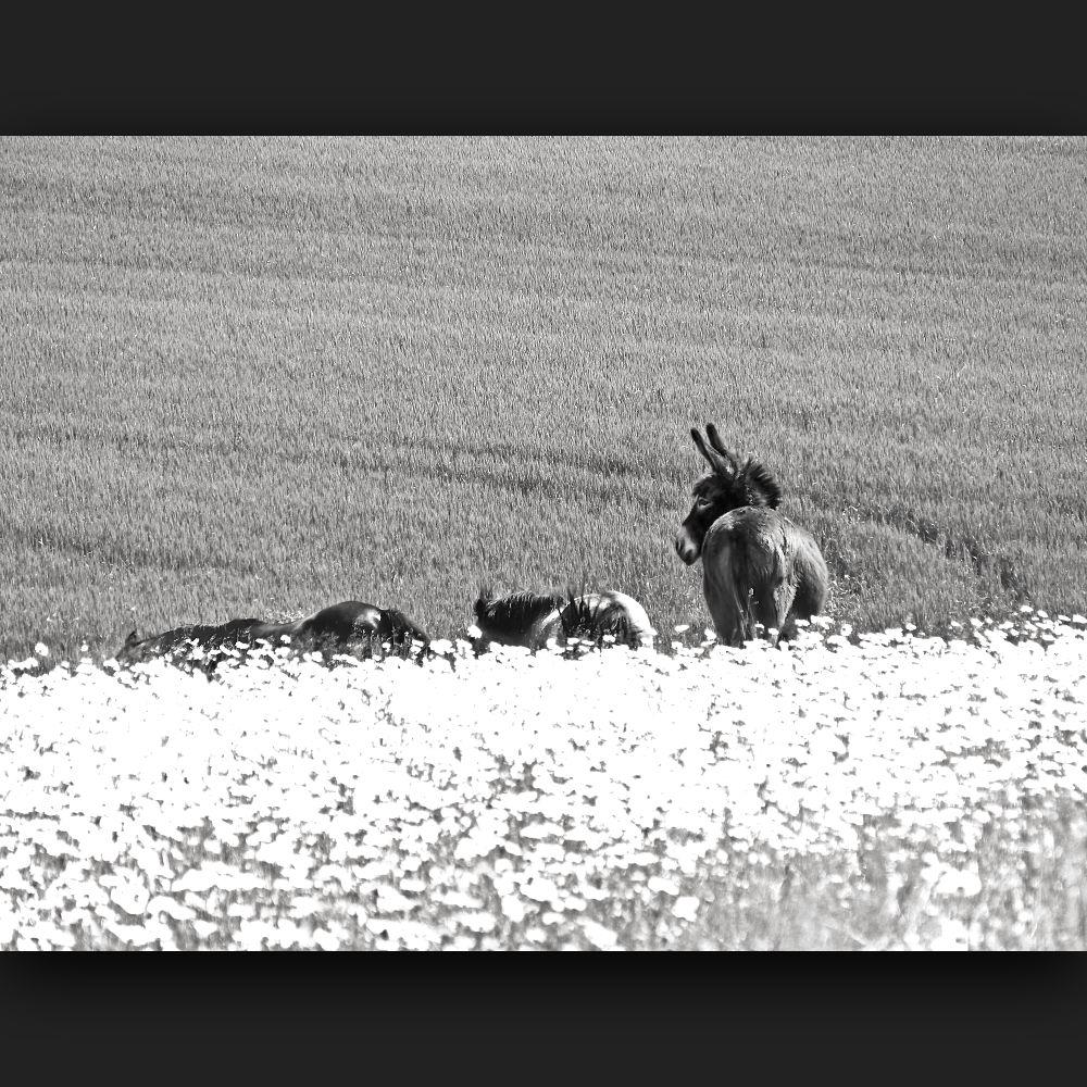 ... among fields