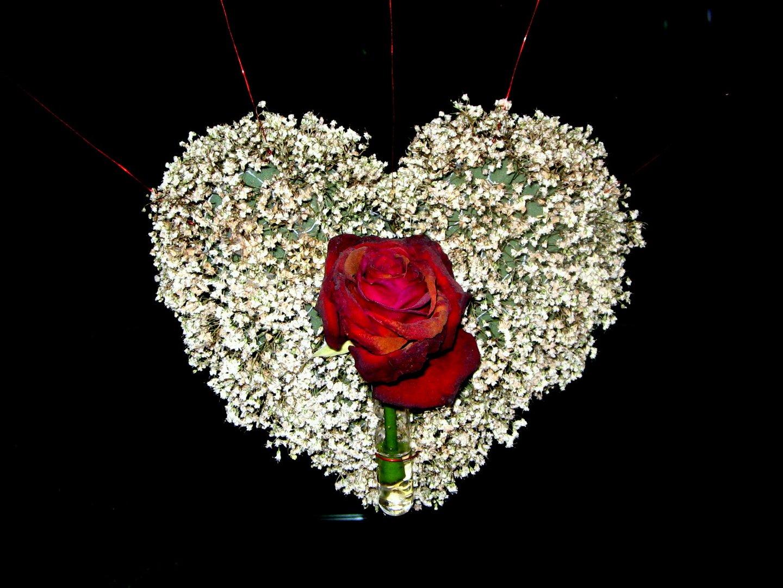 Amore e 'l cor gentil sono una cosa...