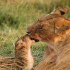 Amore materno...