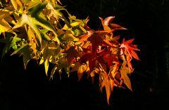 Ampel-Herbst