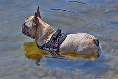 Amy im Teich