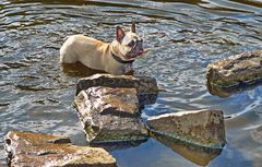 Amy in Teich