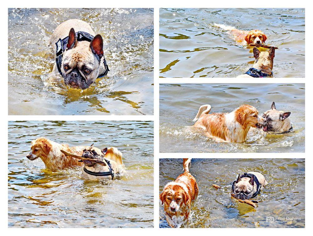 Amy und Luna, Badespaß im Rhein II