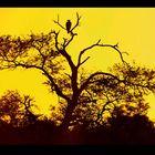 An African Sunrise