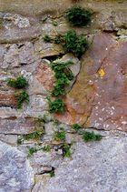 An alten Klostermauern...
