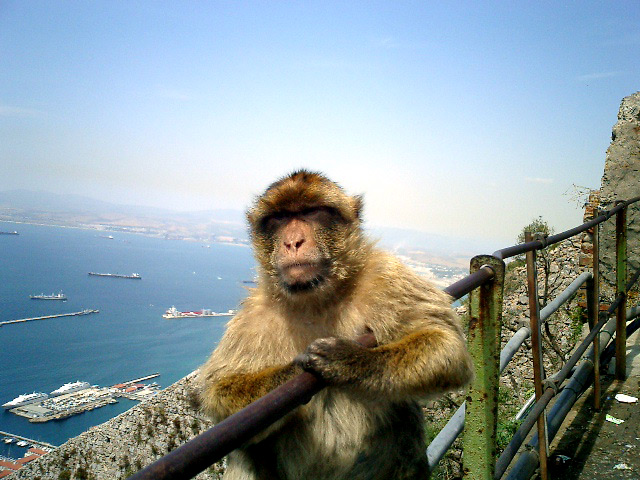 An Ape's Life