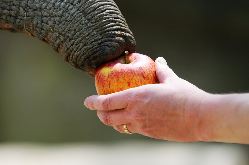 An apple a day keeps the doctor away...