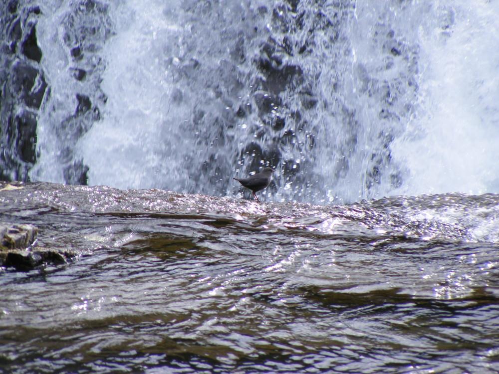 An den Ellbow Falls