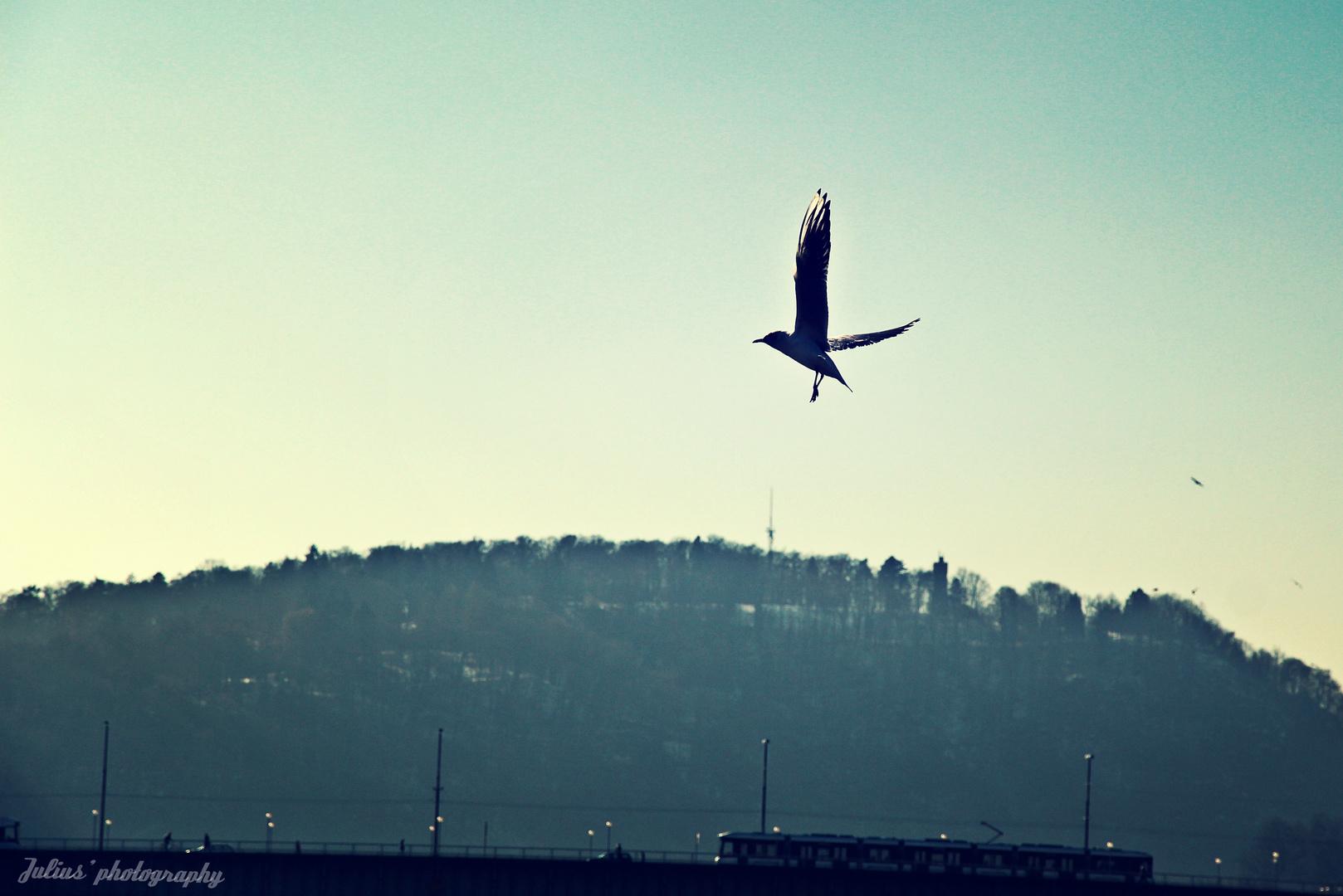 An der Donau.