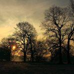 An der Mulde im vorderen Tiergarten in Dessau - 3 -