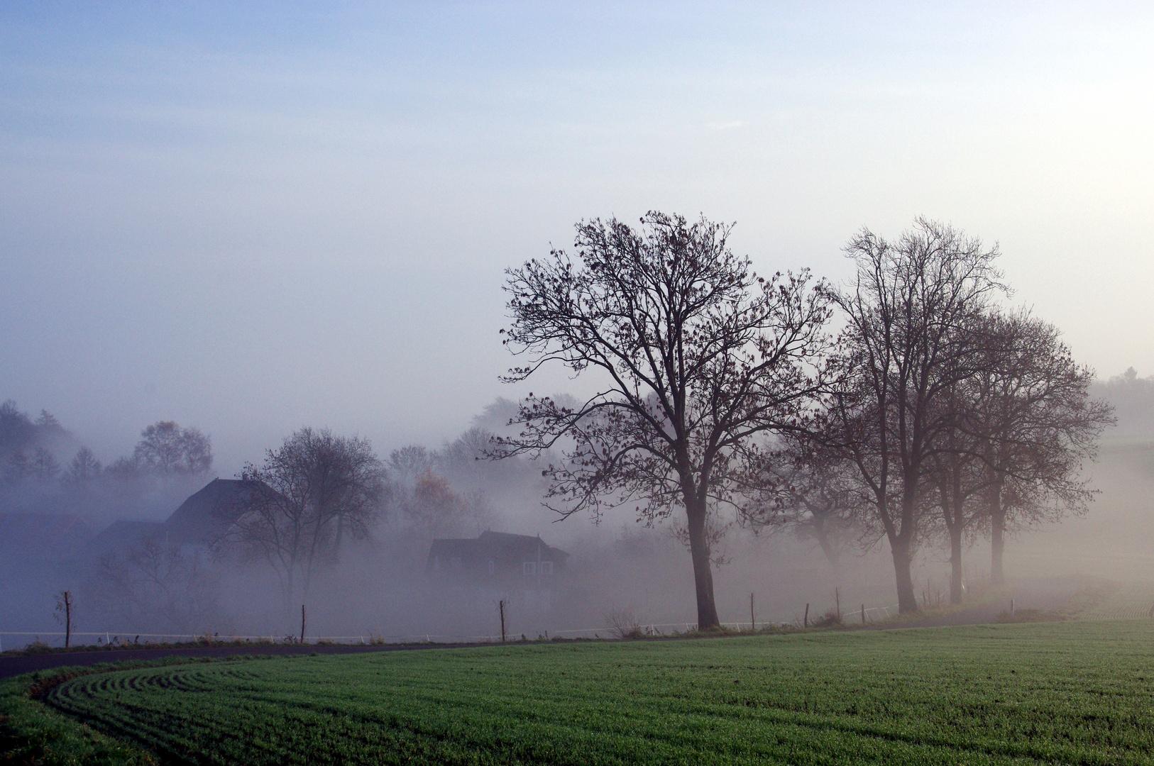 an der Nebelgrenze ...