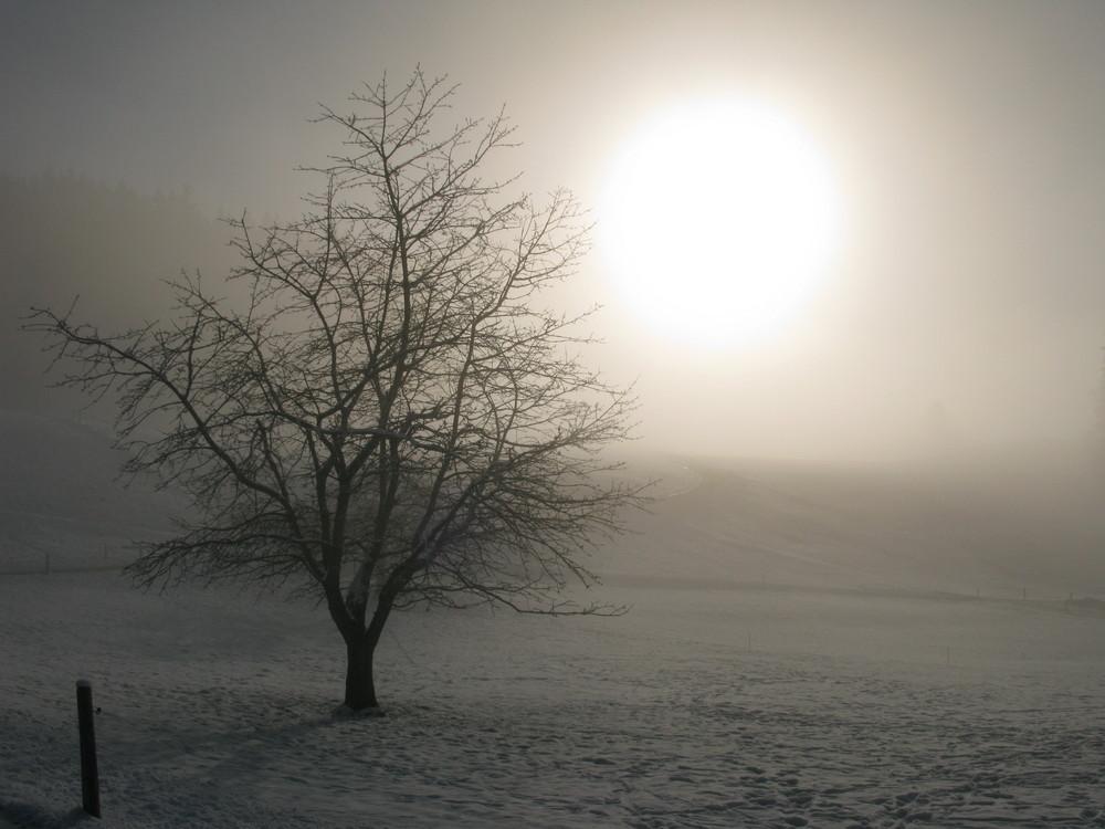 An der Nebelgrenze, St. Gallen Schweiz - Richtung Stein AR