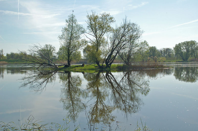 An der Oder bei Lebus