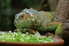 An der Salatbar