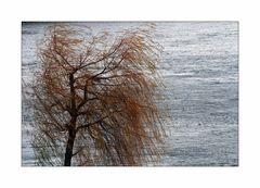 An der schönen, aber nicht immer blauen Donau