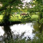 An der Seeve grasen Pferde ,guckten kurz hoch und ....