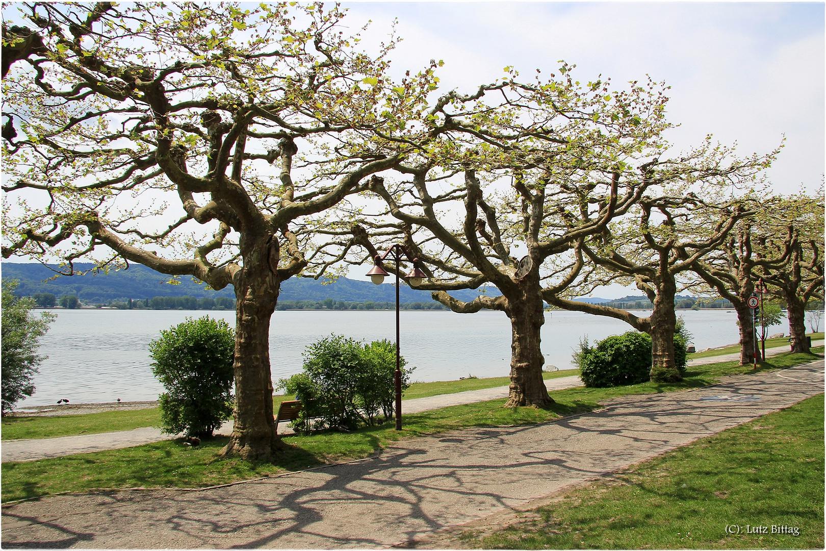 An der Uferpromenade von Radolfzell am Bodensee
