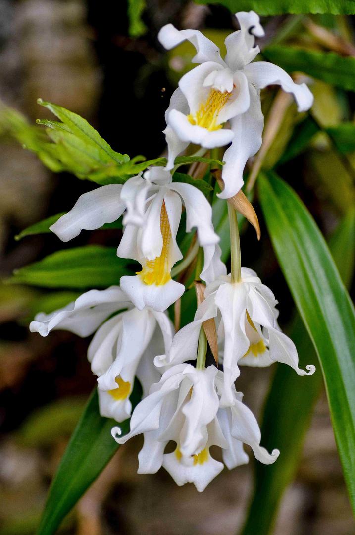An der Universität nennt man es Orchideenfächer