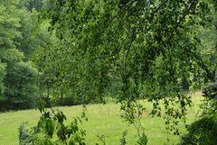 An der Waldwiese