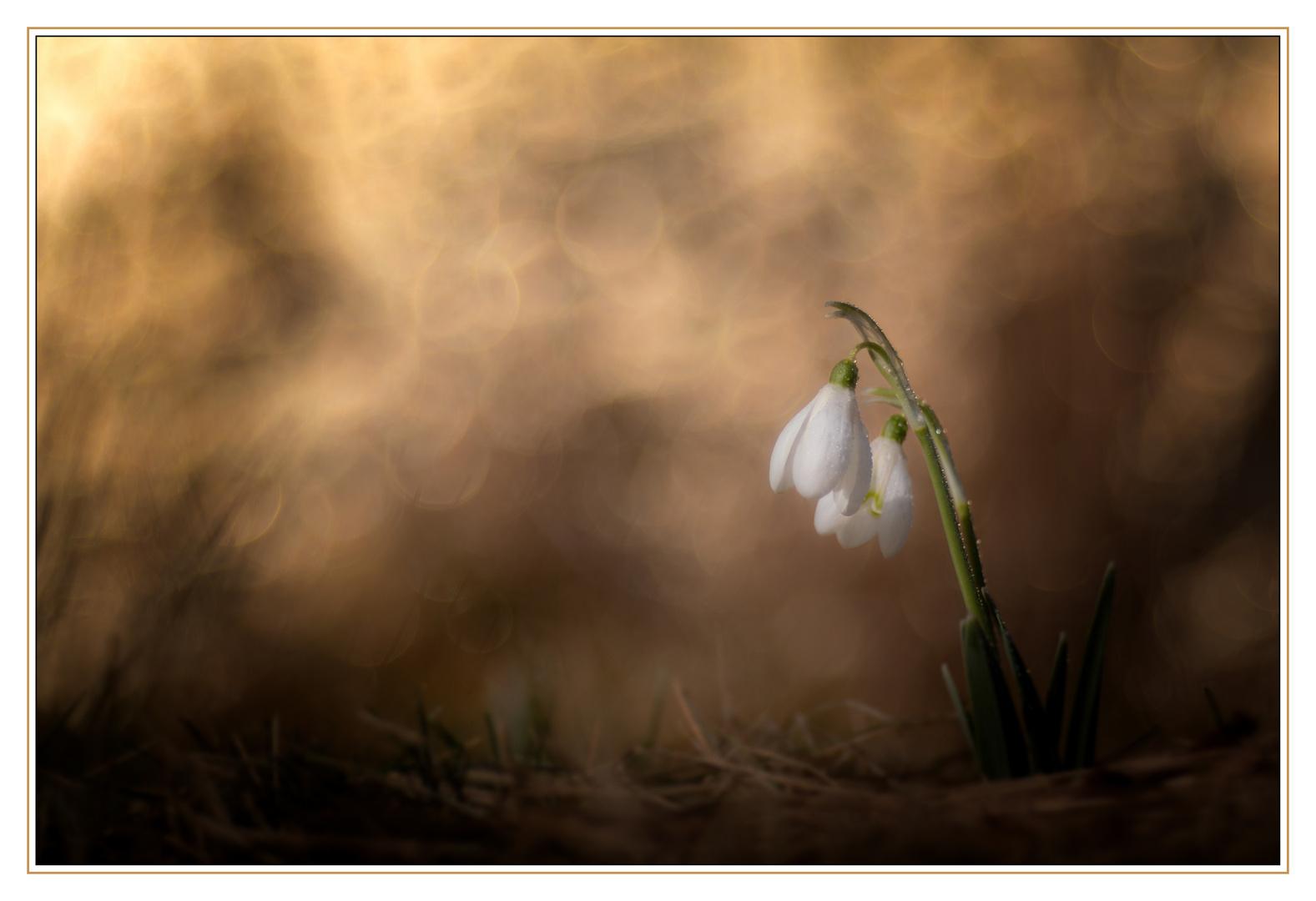 An einem Frühlingsmorgen