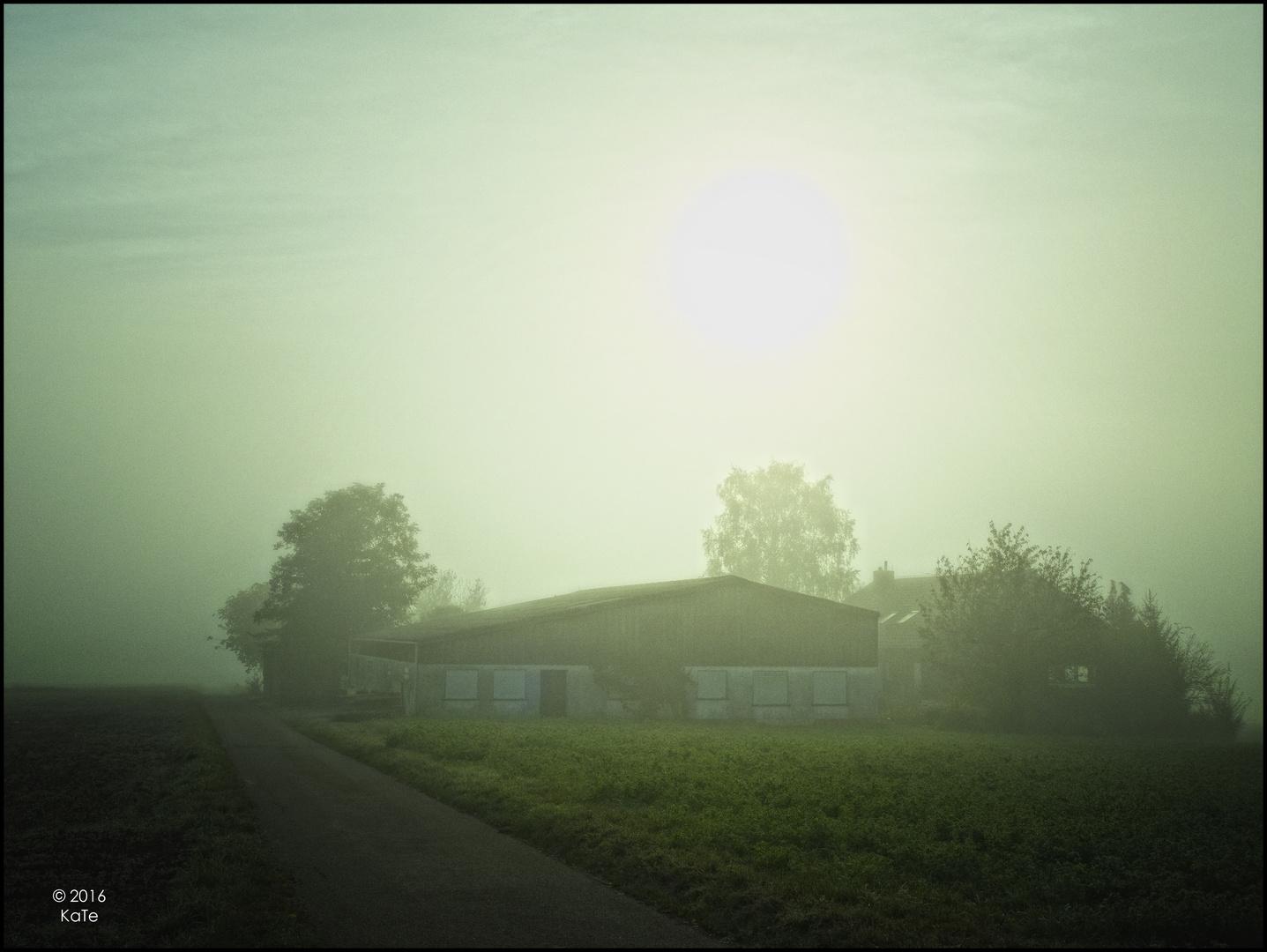 An einem Nebelmorgen