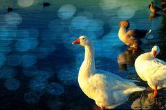 an einem Sonnentag am Lago Laprello