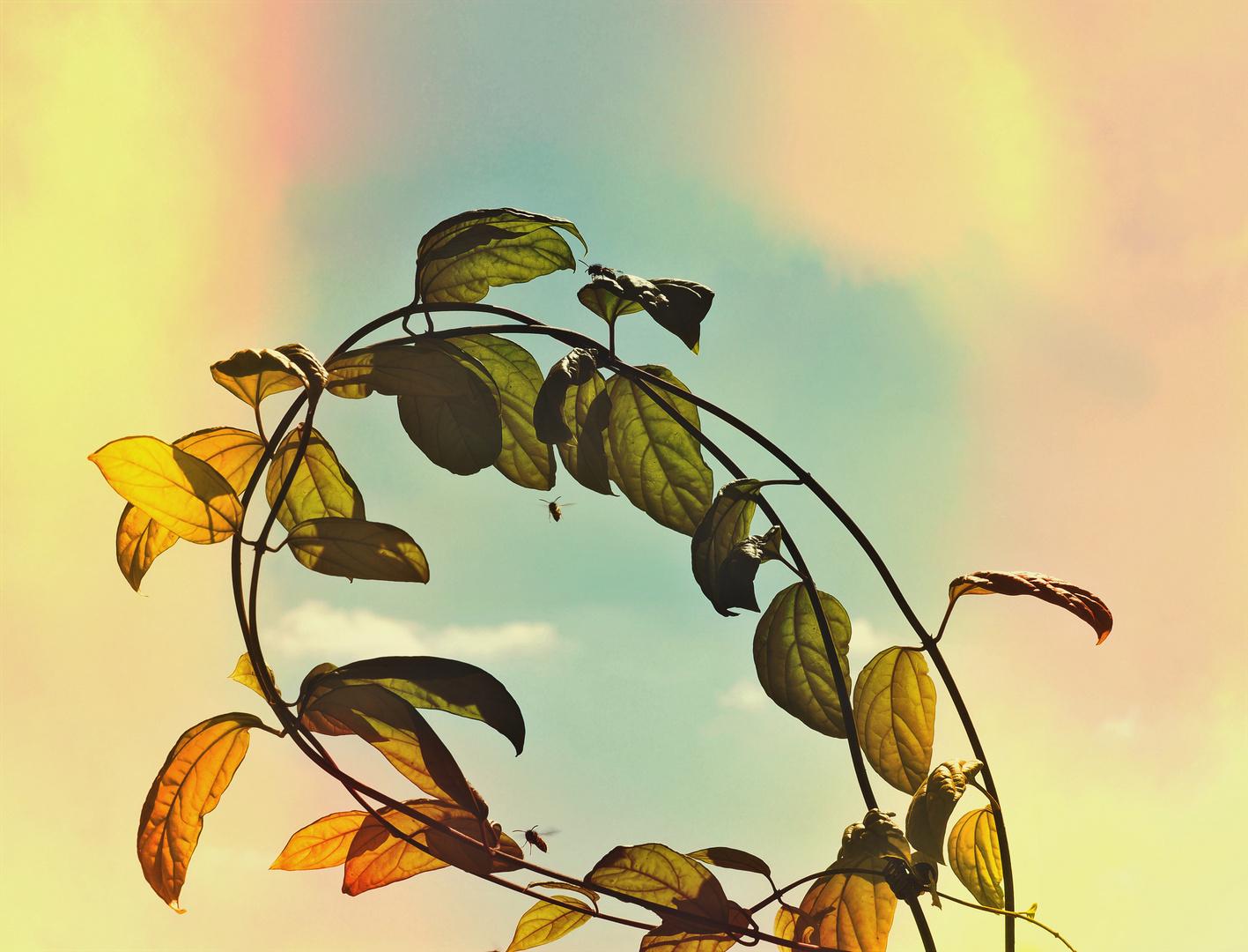 An einem sonnigen Herbsttag..