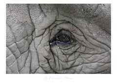 An Elephant's Dream