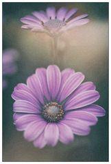 Analog Flowers #1 (reloaded)