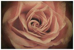 Analog Flowers #2 (reloaded)