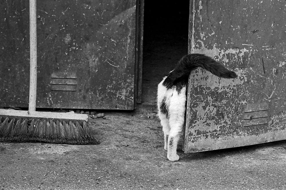 Analog Katze