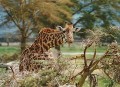Analog - Wildlifefotografie