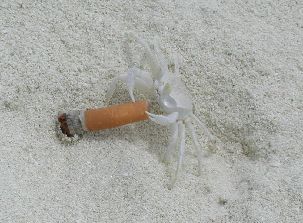Anche gli animali fumano..