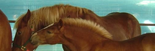 anche i cavalli sono mammoni!