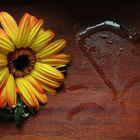 Anche i fiori hanno un cuore