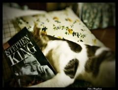 Anche io leggo King