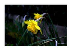 Anche questa è primavera.....