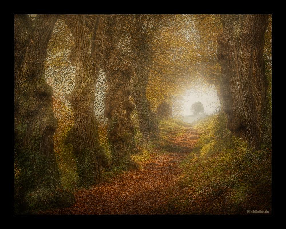 Ancient autumn trees.