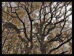 Ancient Woods III
