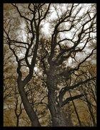 Ancient Woods IV