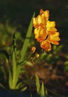 ancora un . . . fiore