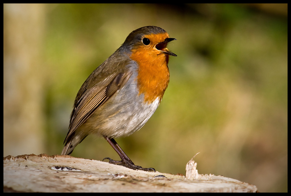 And another Robin Photo :-))